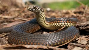How To Find Snakes In Your Backyard Will Moth Balls Keep Snakes Away Reference Com