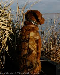 duck hunting dog justin hoffman outdoors