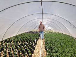 san antonio native plants mega grower color spot nursery to consider growing clean chemical