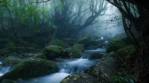 imagenes de paisajes lluviosos galería los 5 lugares más lluviosos del mundo y sus paisajes