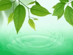Green Plants Plants Nature Wallpaper Natural K Green Cool Images Leaves Hd