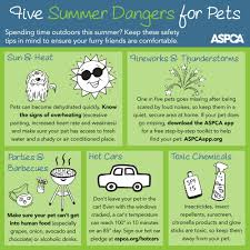 5 ways to keep your dog safe during the summer infographic