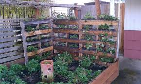 urban vegetable garden design inspiring exemplary vertical