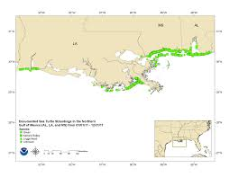 Map Of The Gulf Of Mexico Sea Turtle Strandings In The Gulf Of Mexico Office Of Protected