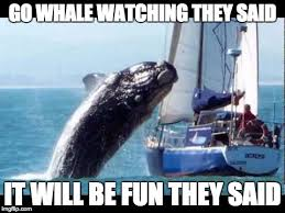 Whale Meme - whale watching imgflip