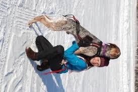 skiing with australian shepherd best in show daily