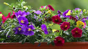 vorgehã ngte balkone gräser für garten und balkon zdfmediathek