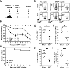 polymicrobial sepsis increases susceptibility to chronic viral