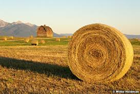 willie holdman photographs order barn hay bail rolled
