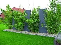 par vue de jardin haie de jardin brise vue brise vue chromeleon