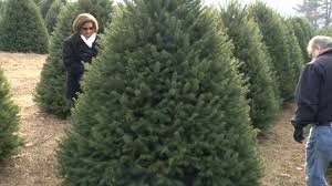 nj farms where you can cut down your own christmas tree 2013