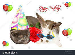 funny cat baby bunny party accessories stock photo 378250441