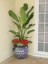 bathroom design fabulous best plants for bathroom small house