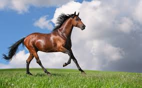 beautiful horses wallpaper dzqxh com
