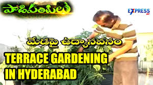 beautiful u0026 wonderful terrace gardening by rama raju in hyderabad
