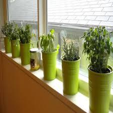 Indoor Kitchen Garden Ideas Image Result For Build A Rose Trellis Trellis Ideas Pinterest