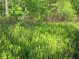 native plant file watson rare native plant preserve warren texas jpg