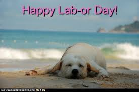 Labor Day Meme - i has a hotdog labor day funny dog pictures dog memes
