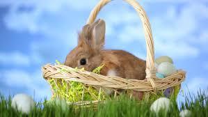 rabbit easter basket bunny and easter basket stock footage 4553972