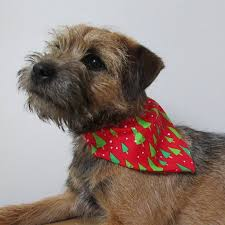 christmas gifts for your dog dogbuddy blog