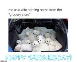Happy Wednesday Meme - image tagged in puppies shopping wednesday imgflip