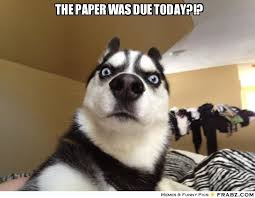 Dog Meme Generator - the paper was due today shocked dog meme generator