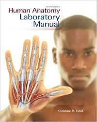 Human Anatomy Physiology Laboratory Manual Pdf Amazon Com Human Anatomy Lab Manual 9780073525662 Christine M