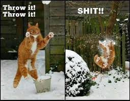 Cat Fight Meme - cat having snowball fight meme
