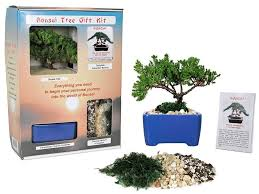 s bonsai tree starter kit complete kit with 2
