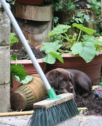 how to keep dogs out of garden dog repellents deterrents and