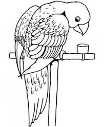 parrot bird coloring kids coloring pages