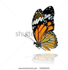 royalty free the flying common tiger butterfly with 333565556