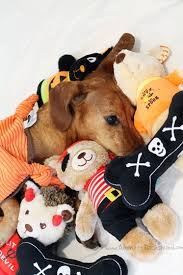 halloween toys from martha stewart pets a giveaway ammo the