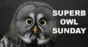 Superb Owl Meme - footballz superb owl preview footballz