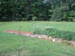 the where and why of our backyard food forest kw homestead