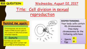 aqa new specification cell division in sexual reproduction