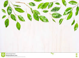 White Flag With Green Leaves Green Leaves Border Nature Background Stock Image Image Of