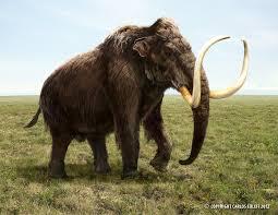woolly mammoth extinct extinct animals