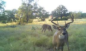 deer management and hunting