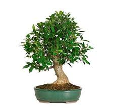 best 25 bamboo trees for sale ideas on bamboo