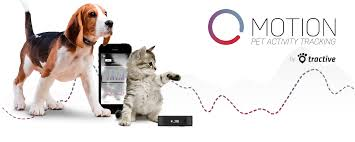 gadgets to stalk your pet through your smartphone ces 2015 az