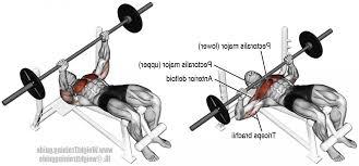 decline bench press muscles decline barbell bench press bench press works what muscles 1