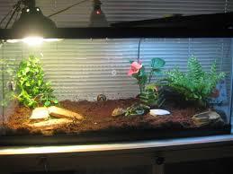 idee deco aquarium fish tank pink diy turtle tank decorations staggering picture