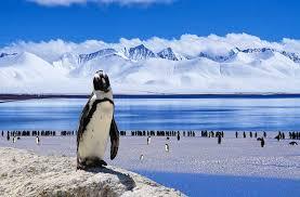 imagenes de la antartida puestos de empleo en la antártida en british antartic survey