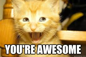 You Are Awesome Meme - you are awesome meme google search cutie animals pinterest