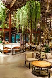 best 25 hanging ferns ideas on pinterest string garden indoor