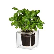Self Watering Wall Planters Boskke Clear Cube Self Watering Planter The Green Head