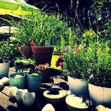 topfpflanzen balkon blumen schnittblumen zimmerpflanzen blumen für garten und