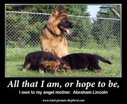 German Shepherd Memes - mom jpg