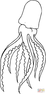 coloring squid coloring page